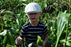 Høst selv majs med Irma @ Sørisgaard | Ølstykke | Danmark
